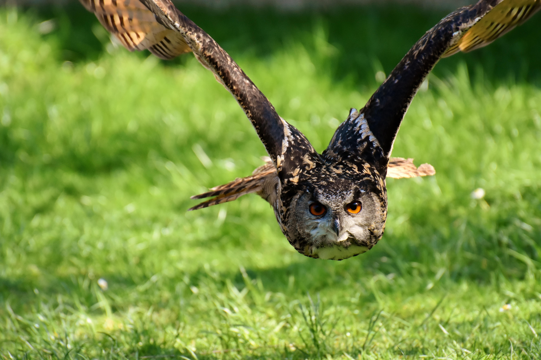 owl-3340957