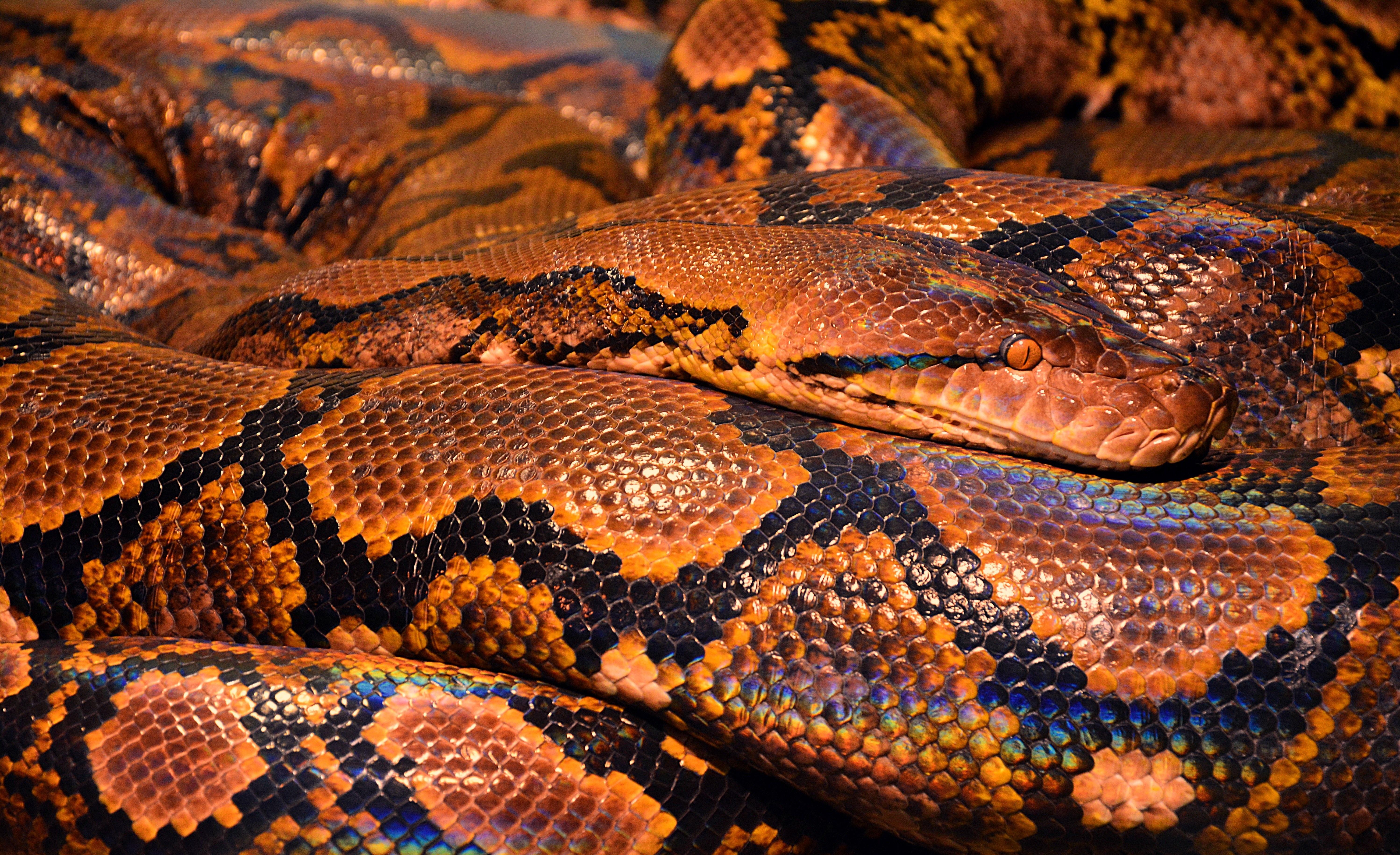 snake-771541
